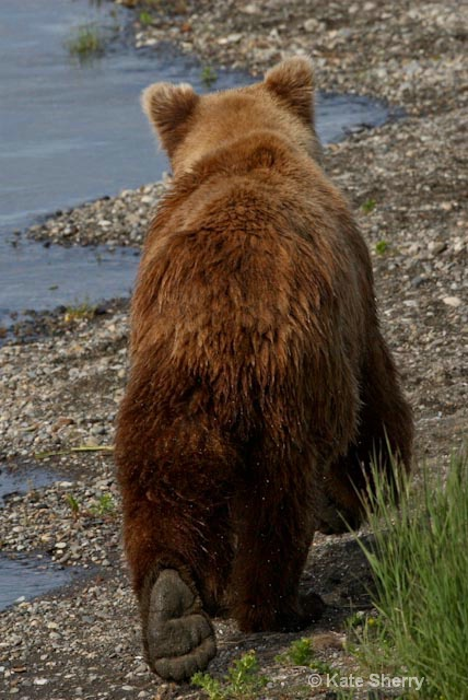 Bear end!