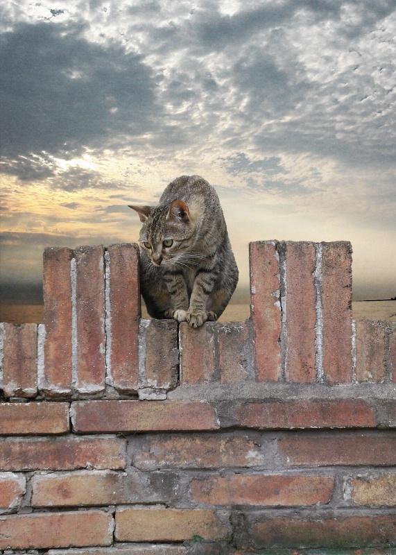 Kitty of Orvieto