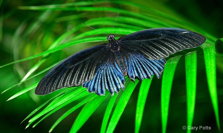 Sentosa Butterfly Pavilion