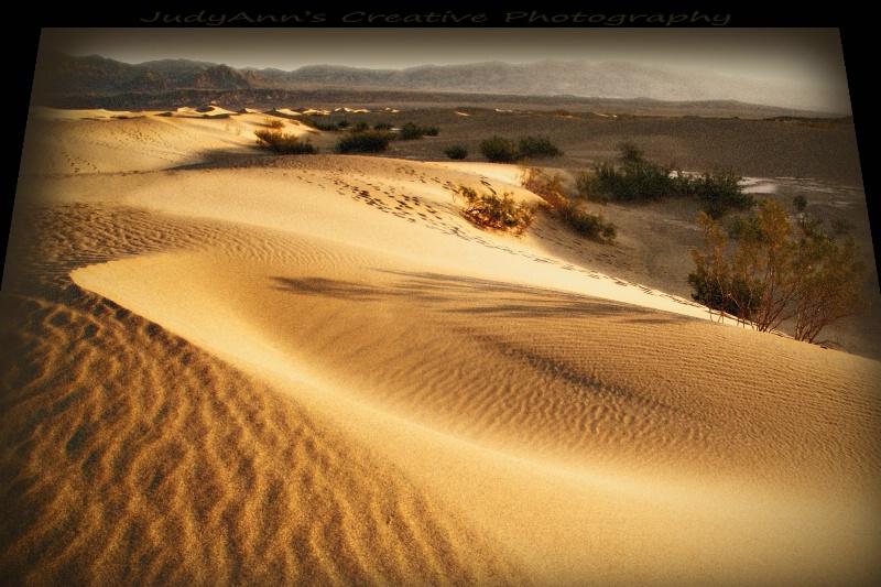 Wonder of the Dunes
