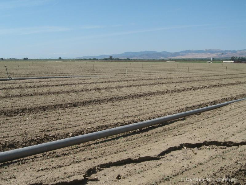 Farmland in Soledad