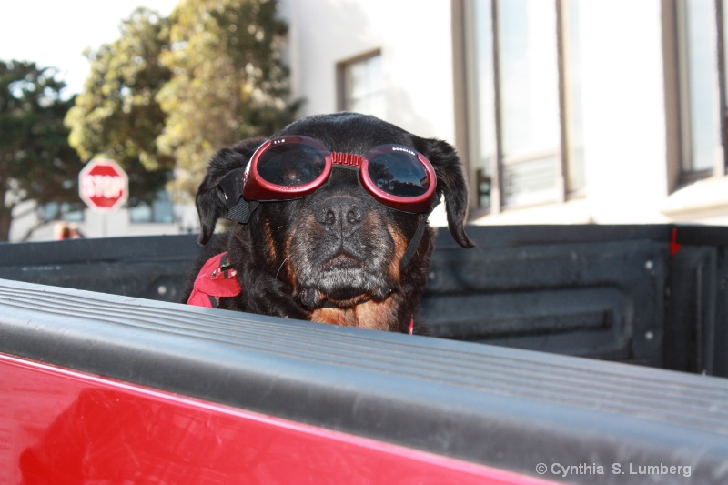 Cleo with Doggles.