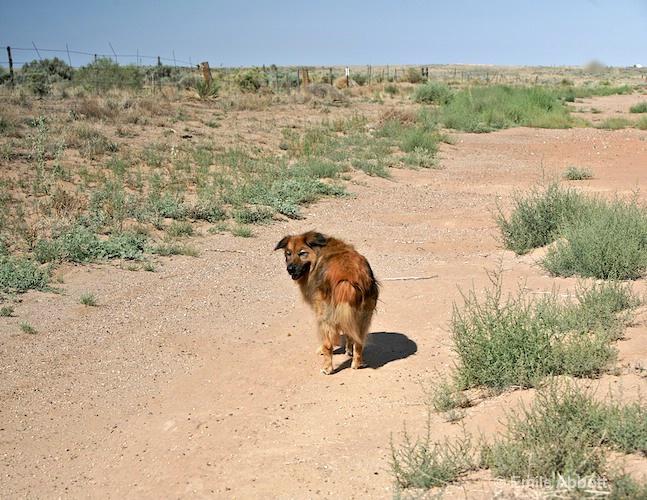 Open Dog Run