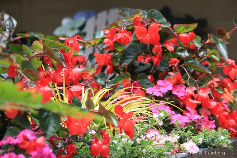 Tropical Garden. . .