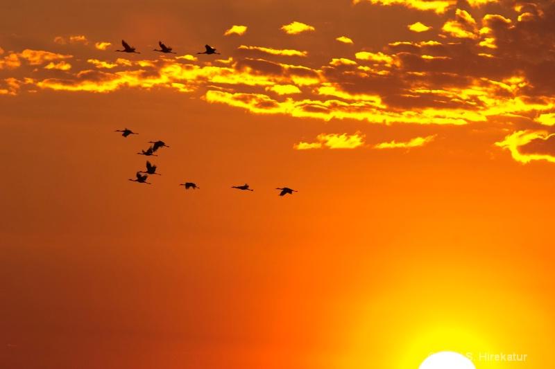 Sunrise at Horicon Marsh