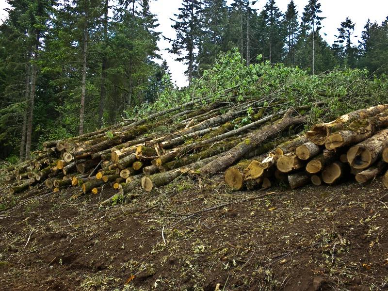 Log Sorting, Logging-Oregon