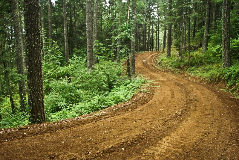 New Road to Logging Area, Oregon