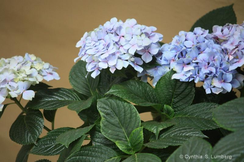 Summer Blossoms. . .
