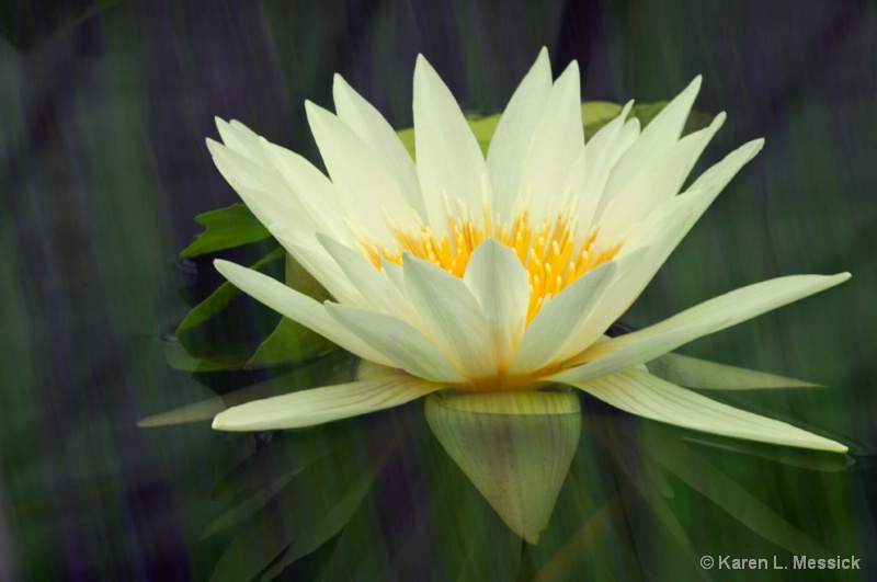 Water Colors Lily