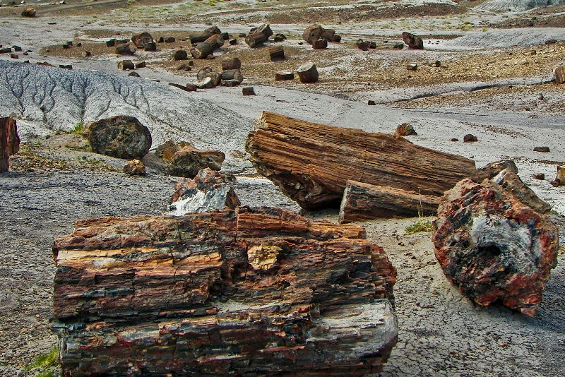 Hard Wood, Petrified Forest-AZ