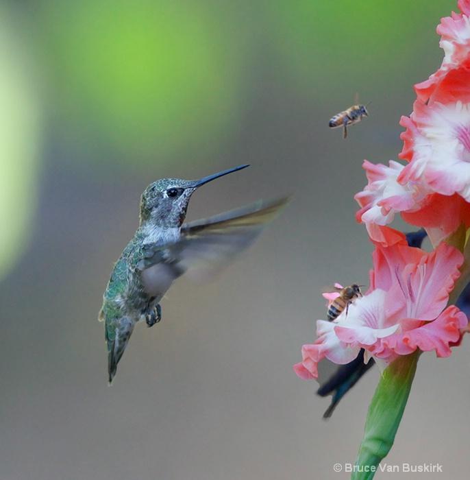Drat - Bees