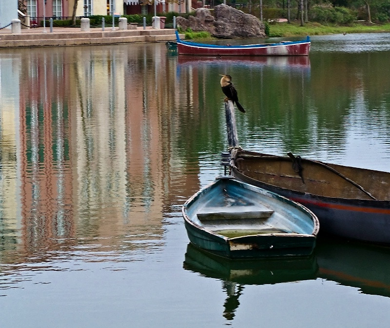 Portofino Bay, USA