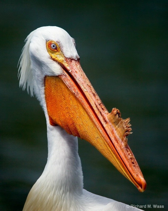 There's What on My Beak?