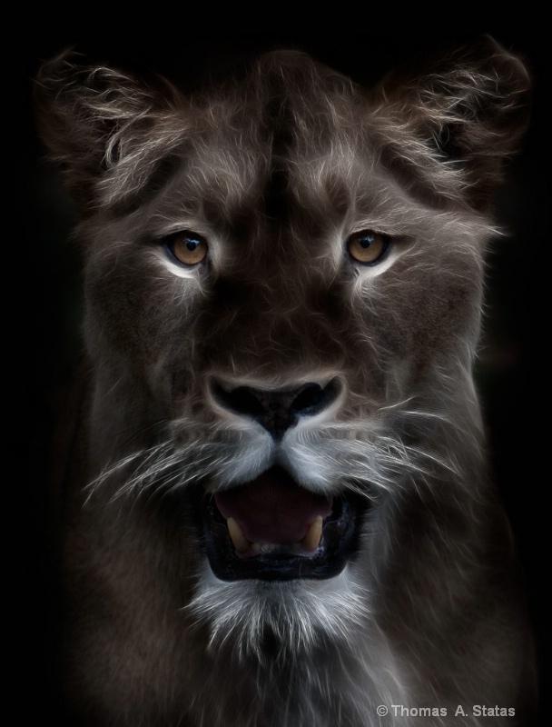 The Dark Lioness