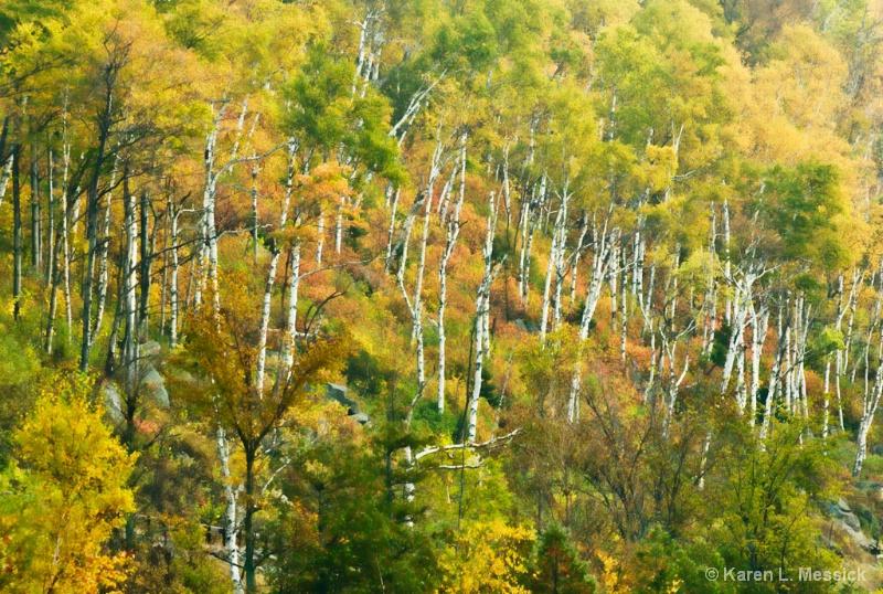 Hillside Beauty