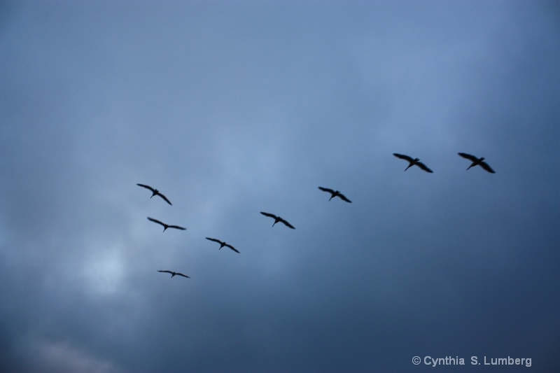 In Flight. . .