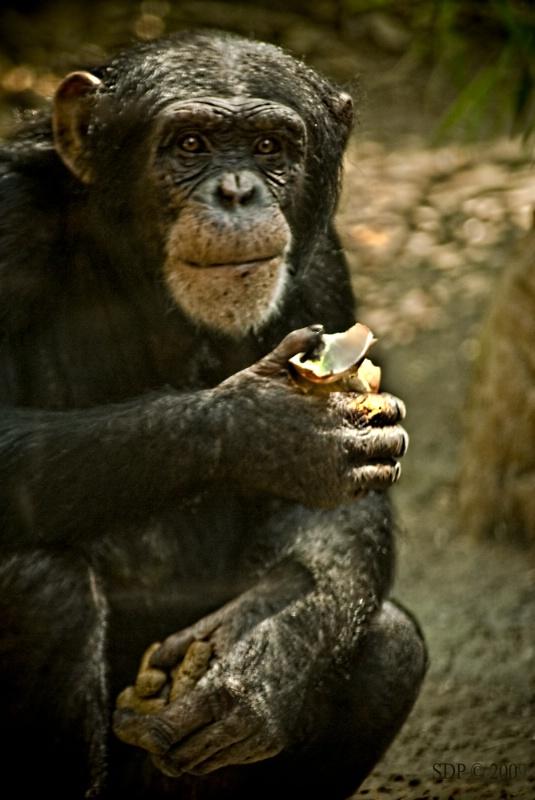 Monkey See...Monkey Do