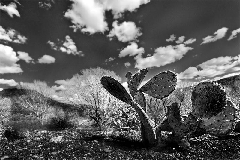 Lonely in Sedona