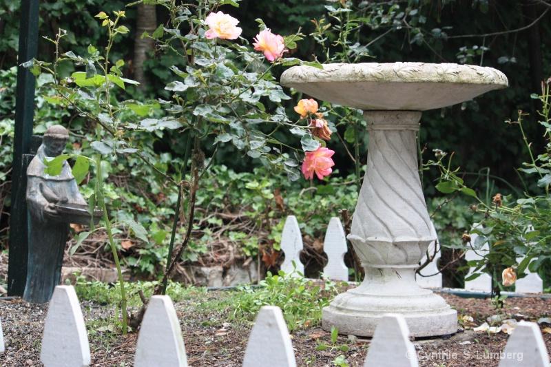 The Rose Garden. . .