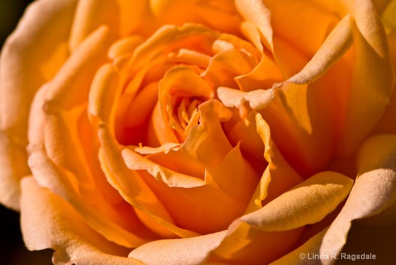 Petals of orange