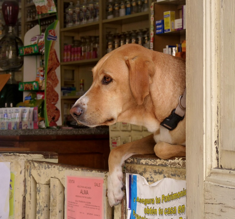 Dog on the Counter