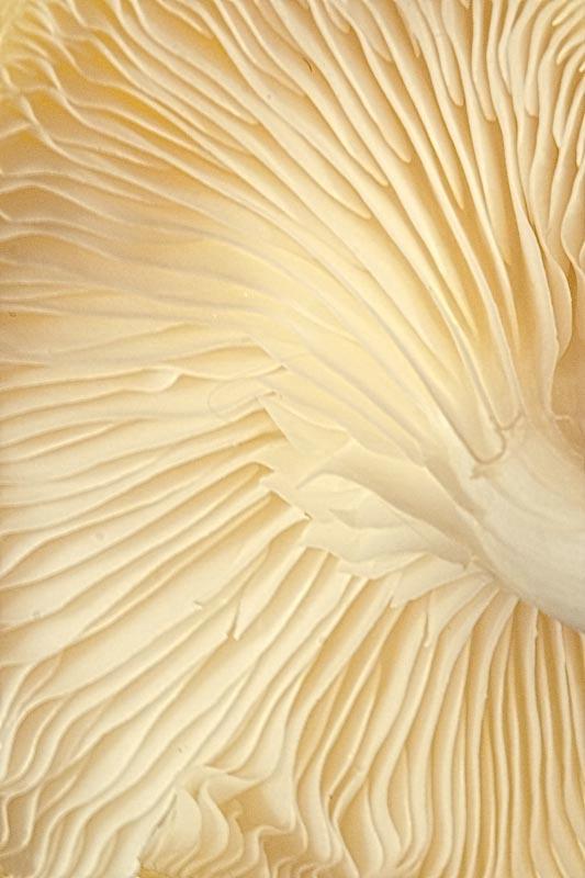 Mushroom Waves