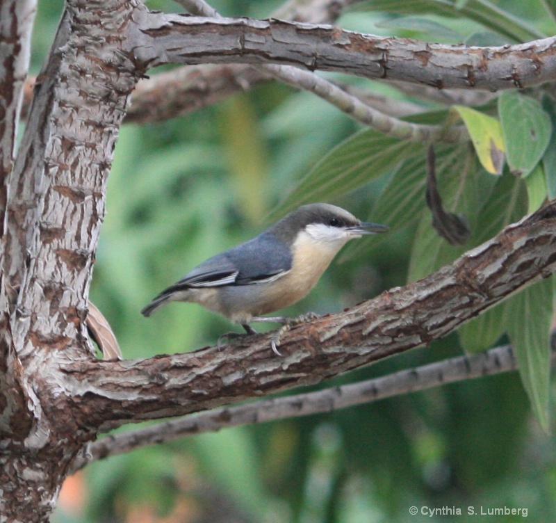 Garden Songbird