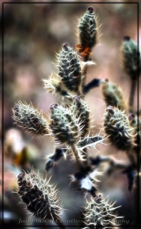 Weeds Have Beginnings Too