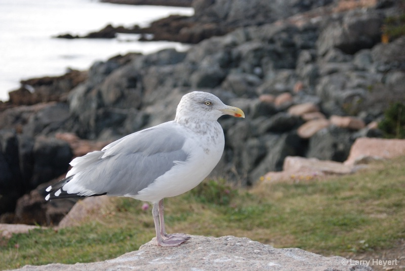 Bird at Acadia National Park in Maine