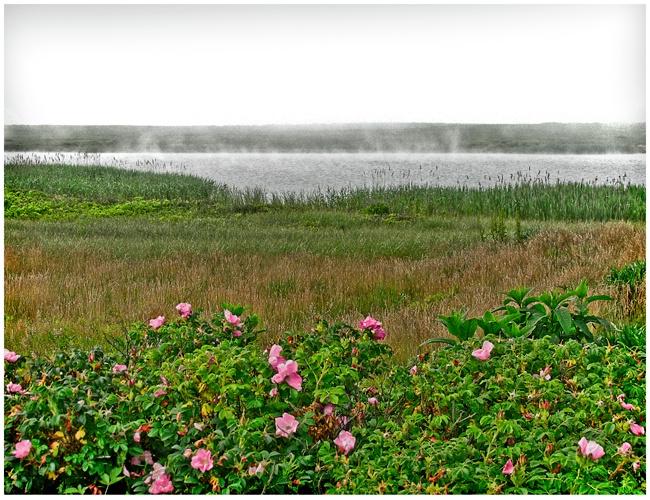 Hummock Roses #134 HDR