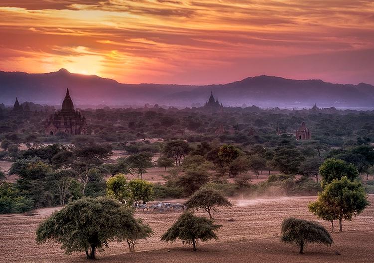 Cattle at Sunset, Bagan, Burma