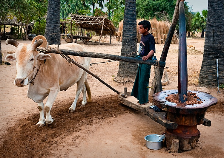Grinding spice paste, Myanmar (Burma)