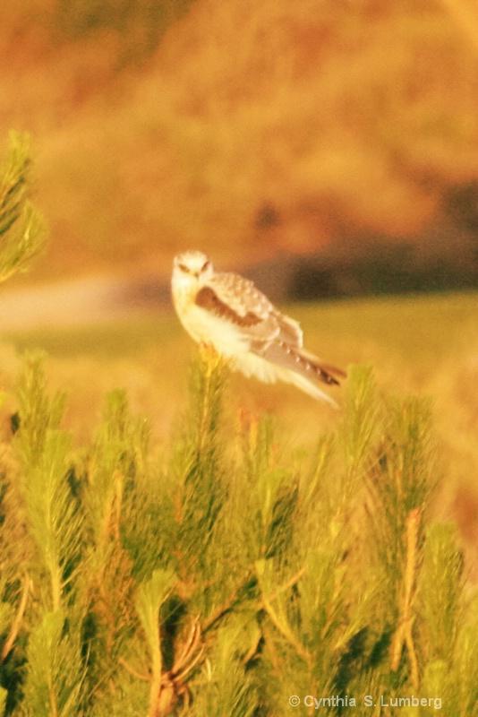 Bird of Prey. . .