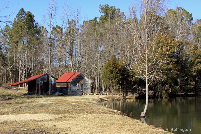 Near The Pond's Edge