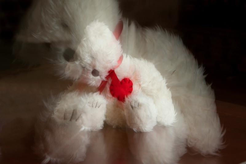 A Beary Valentine