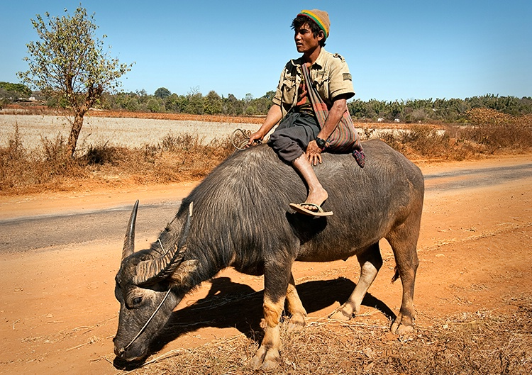 Boy on Buffalo, Myanmar (Burma)