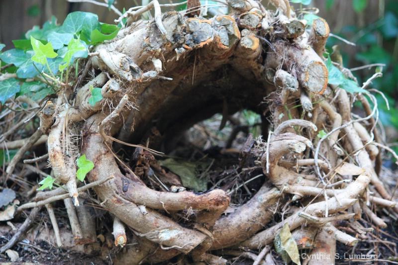 Empty Nest. . .