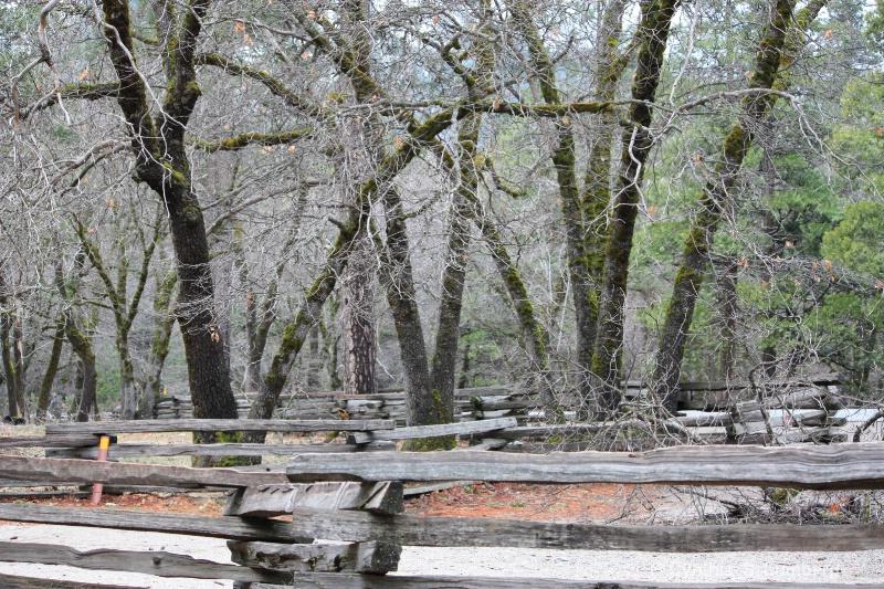 Black Oaks - Yosemite, CA