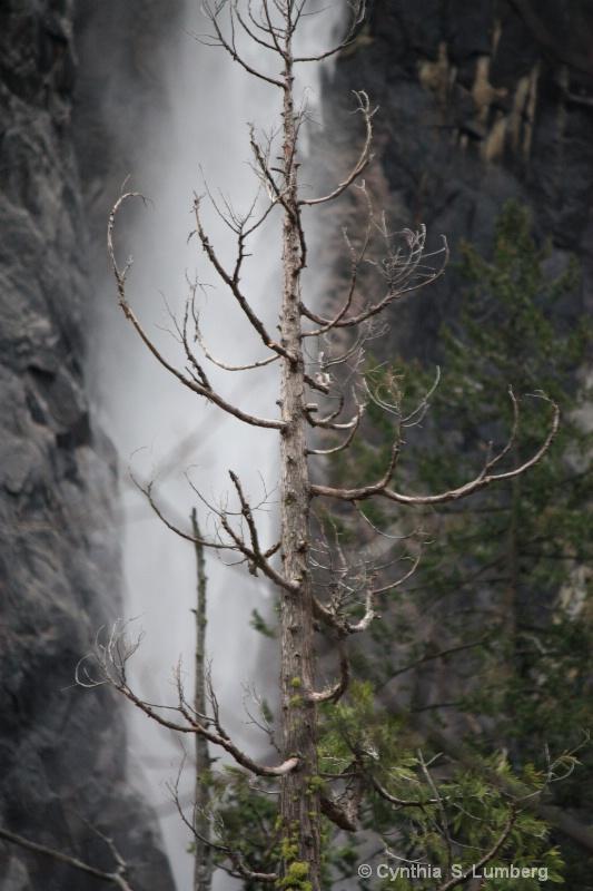 Water of Life. . .Yosemite, CA