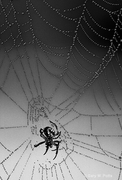 The Spider Waits