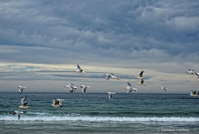 """""""Come Fly With Me"""""""