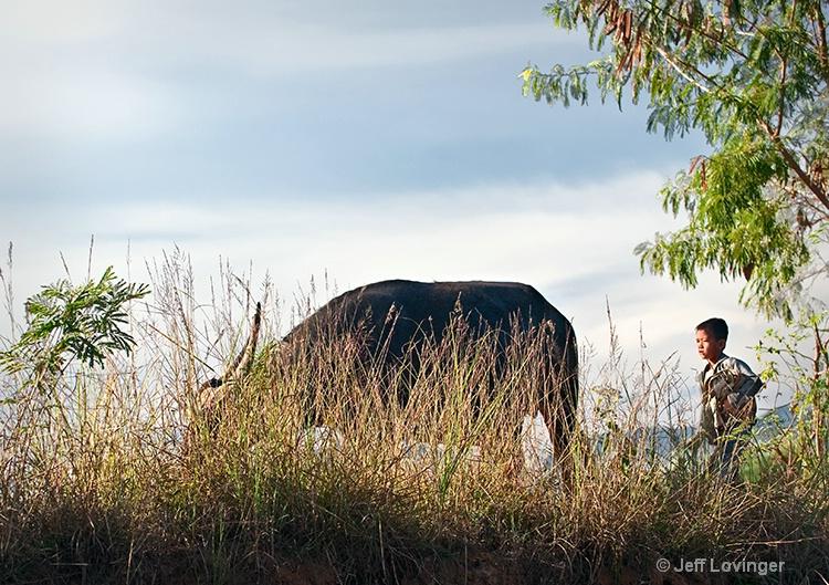 Inle Lake, Boy and Water Buffalo, Myanmar (Burma)