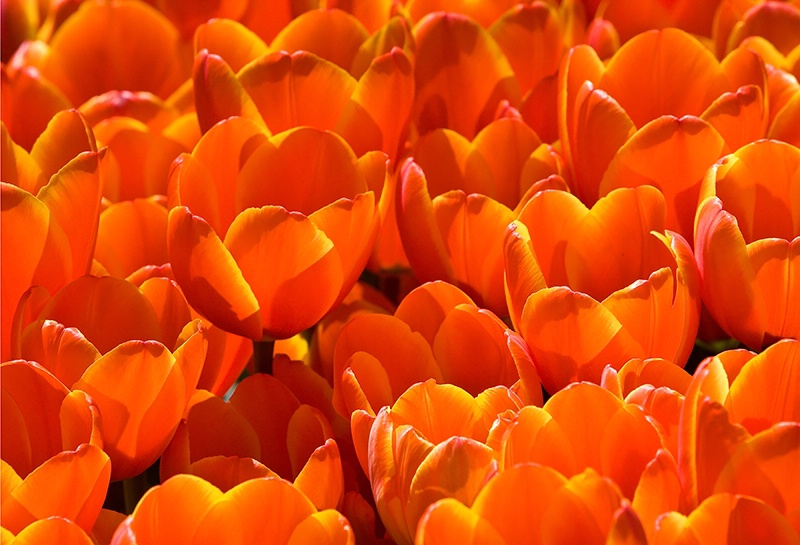 Spring is on Fire