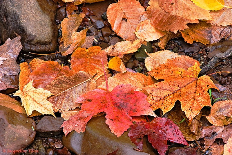 Wet Autumn Ground