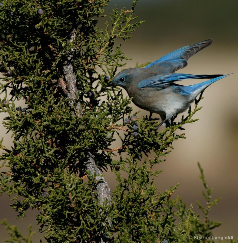 Bluebird Breakfast