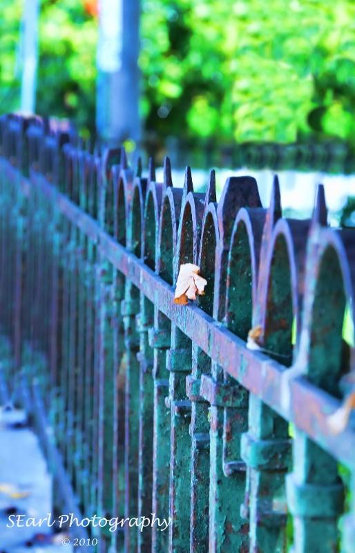 The Fence Row