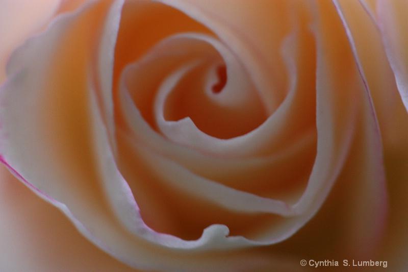 Divine Mercy Rose