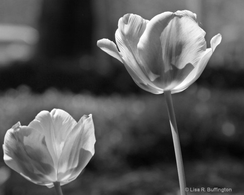 Beauty Without Color