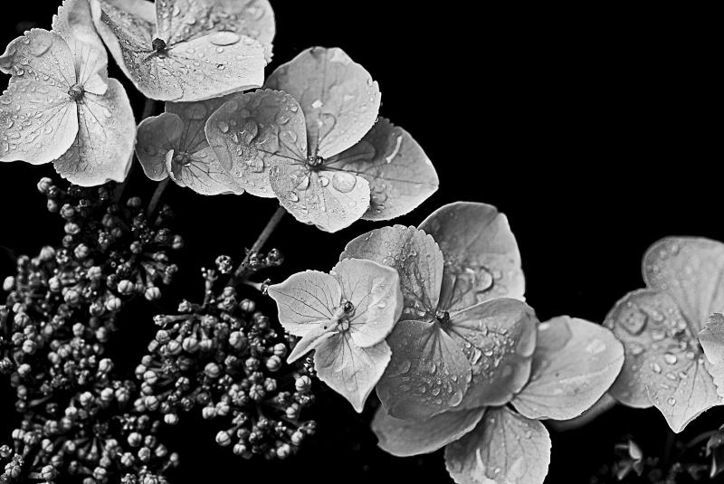 Leave Flower Trails Not Paper Trails B&W Version