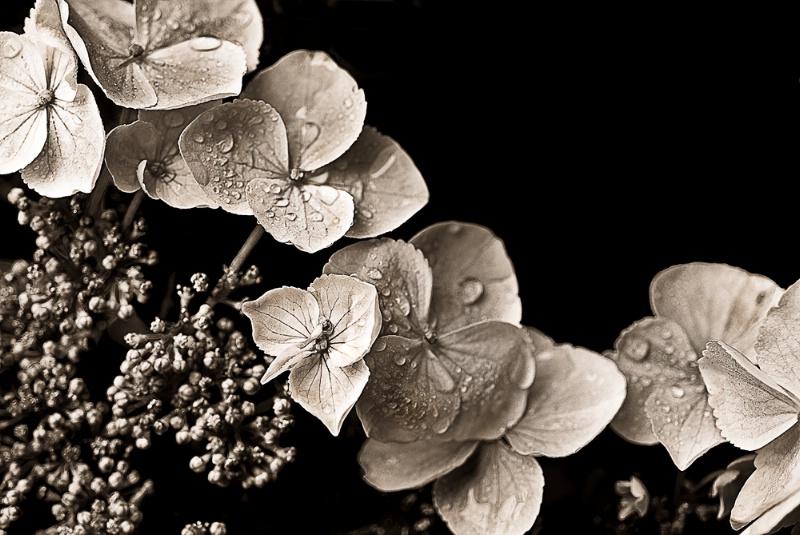 Leave Flower Trails Not Paper Trails Sepia Version